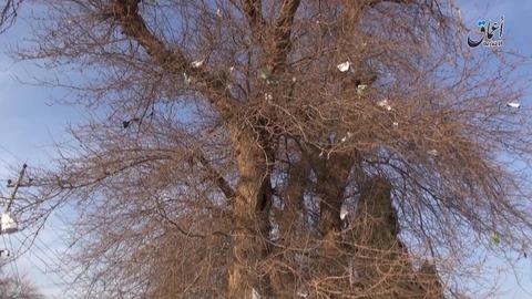 紙片が高い木の上にまで達し、空爆の激しさを物語る