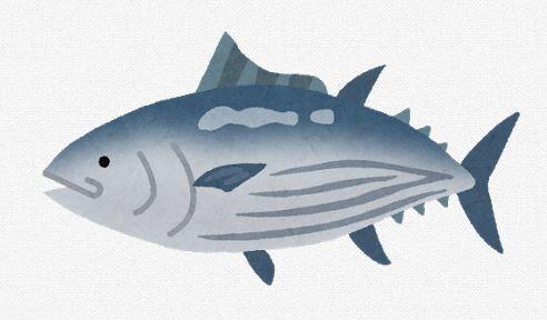 本物の魚好きが好む魚「アジ」「サバ」「イワシ」「カツオ」