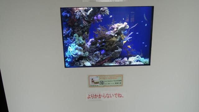 DSCN3295