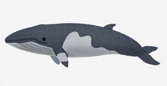 【やる意味が薄れた?】IWC国際捕鯨委員会、今年の会議中止