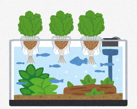 【画像】アクア民さん「百均のスポンジ入れにハイドロボールと観葉植物で水耕栽培できてええぞ」