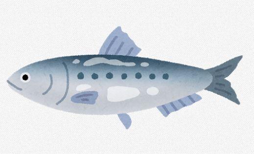 【魚】「もはや打つ手なし」サンマやイカが歴史的不漁!…?苦境の水産加工会社「イワシフライ」に活路見出す