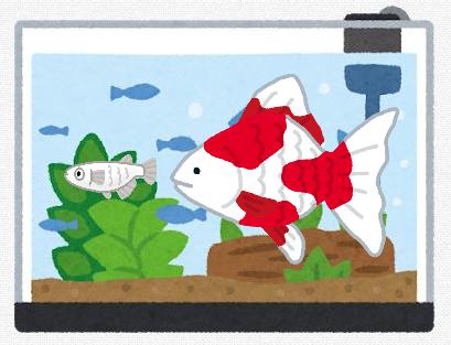 【悲報】辻希美さん、メダカと金魚を同じ水槽で飼って炎上してしまう・・・