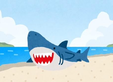 【ぴちぴち】2m級のサメが浜辺に打ち上げられる 米マサチューセッツ州ケープコッド