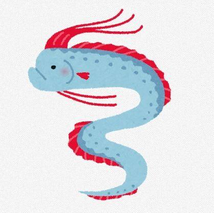 【速報】福井の漁港でリュウグウノツカイが泳ぐ様子撮影される しかも2匹・・・