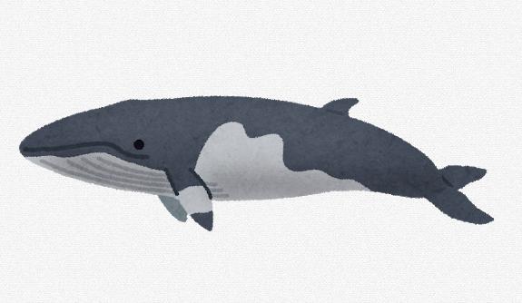 【鯨】正月料理に欠かせない「クジラ肉」の販売会、宮城・石巻市で開かれる