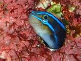 guam225fish