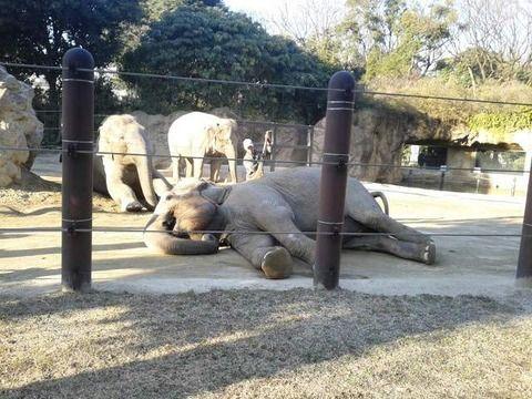 象、マッサージにうっとり