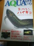 アクアライフ 2004年4月号