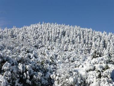 ③白銀の稲尾岳1月