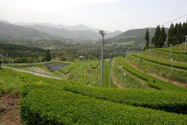 ⑪盤山茶園02