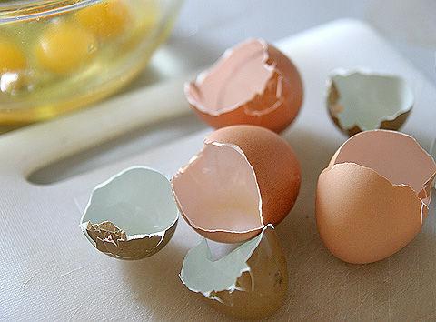 【アクアリウム】卵の殻をろ材に使おうと思うんだけどどう思う?