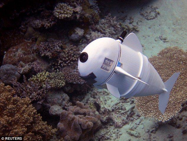 【画像あり】米MITの天才たちが本気で「魚型ロボット」を制作した結果がこちら →