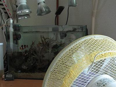 【アクアリウム】水槽用ファンよりも扇風機の方がよっぽど優秀