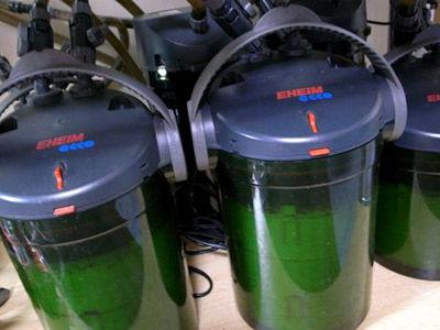 【レッドビーシュリンプ】レッドビーシュリンプ・・・細菌って外部フィルターで取り除けないかな?いい対策ありますかwww