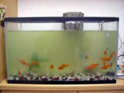 【金魚】濁りがいきなり酷い・・・改善する気がしない