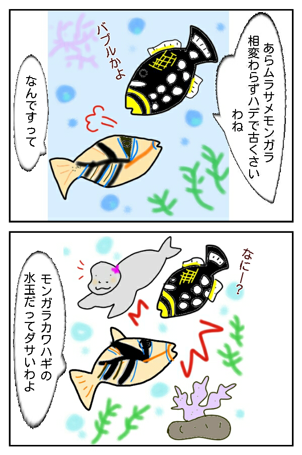 158.親戚の?ゴマモンガラ!