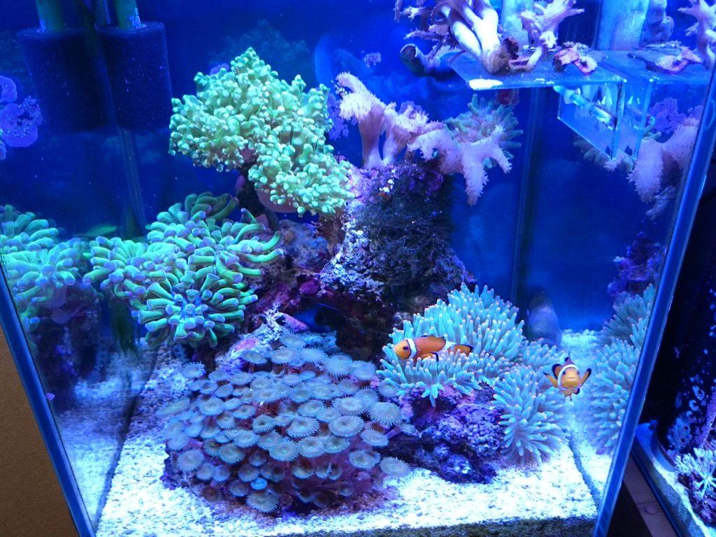 中華製LED(Marine LED light coral SPS LPS grow)の使用感・総括レビュー