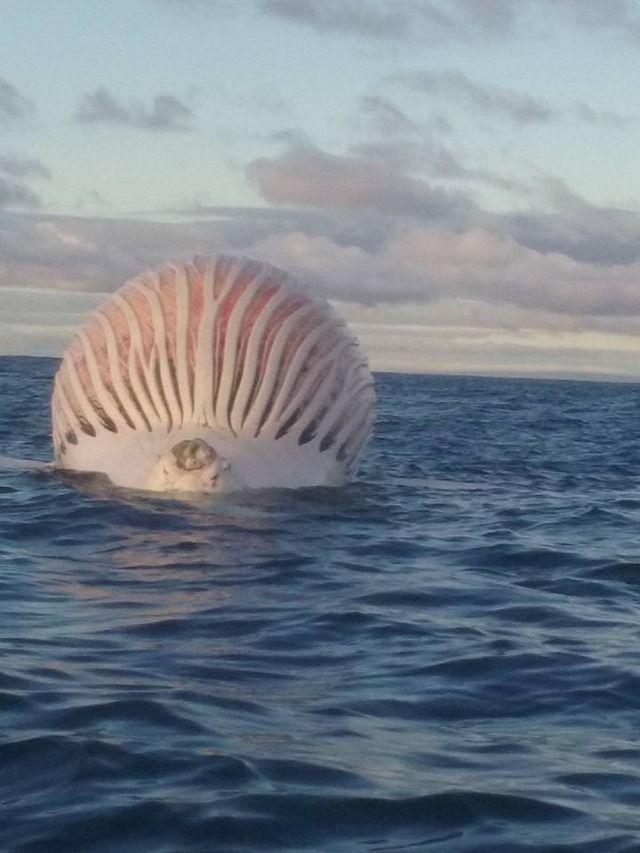 【衝撃】オーストラリア沖の海上でヤバすぎる物体が発見されるwwwwwwwwww(画像あり)