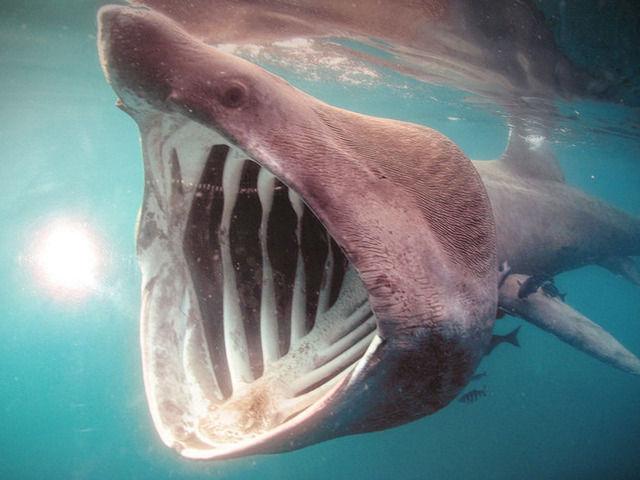【社会】「幻のサメ」と大地震の不思議な関係 偶然の一致?それとも警戒へのサインか