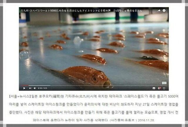 【韓国】日本人は残忍!魚5000匹氷漬けスケートリンクに韓国ネットも反応「残忍さは深刻なレベル」「常識と倫理意識が不足」
