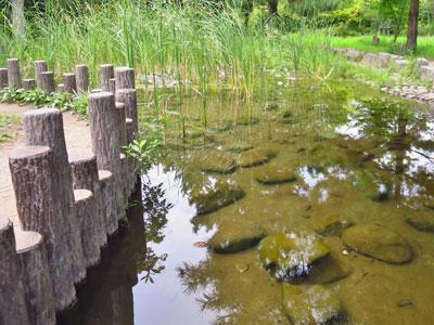 【ビオトープ】・・・小さな公園の小さな池!最近こんなことになっとるらしい