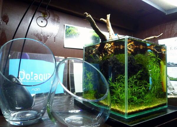 Do!aquaプラントグラス・・ポルカ&カラフ