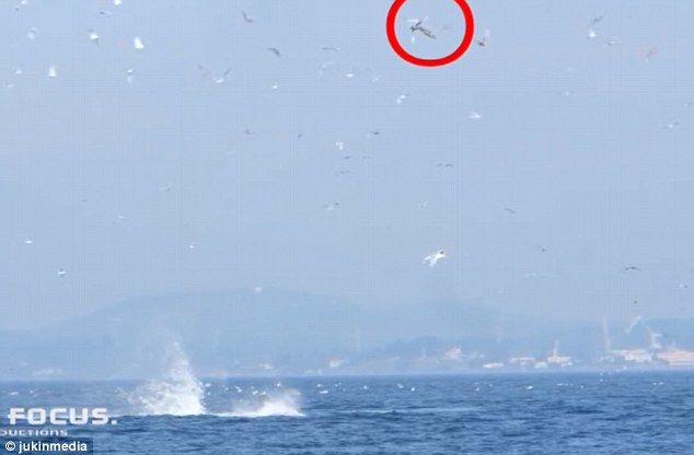 【画像あり】シャチの尾びれアタックが凄すぎてもはや恐怖を感じるレベル・・・