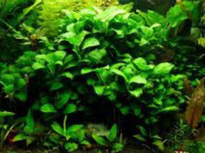 【水草】どういう環境なら綺麗な緑に育てられますか?