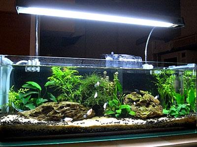【アクアリウム】朝4時間と夜4時間で点灯!魚や水草に悪影響はある?