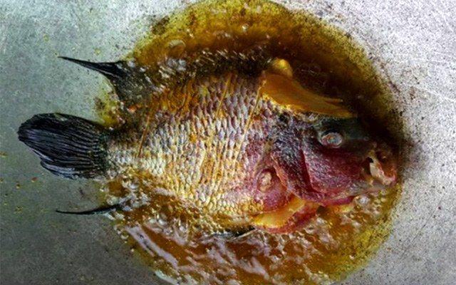 【閲覧注意】マレーシア人さん、高級熱帯魚『フラワーホーン』を調理して食す・・・