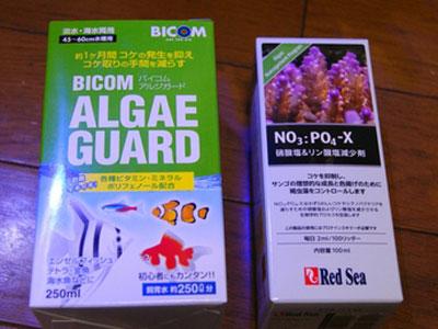 【サンゴ】サンゴ・・・これってイソギンの褐虫藻が抜けて餓死したってこと?