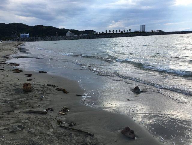 【画像】砂浜で体半分が砂に埋まった「コブダイ」が発見されるwwwwwwwww