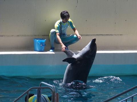 イルカ,水族館で僕と握手!