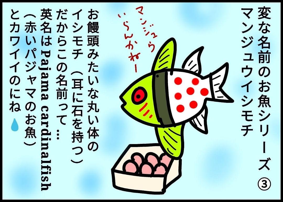 変な名前のお魚シリーズ③マンジュウイシモチ