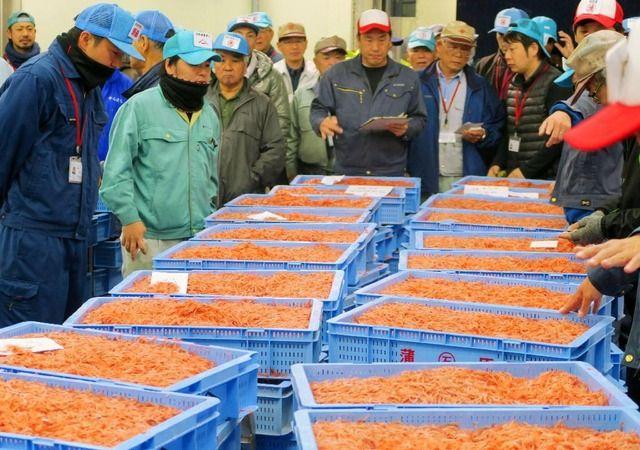 【静岡】静岡でサクラエビ初競り 近年にない豊漁