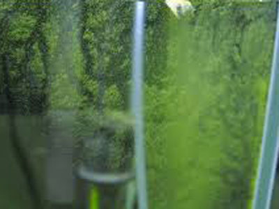 【アクアリウム】激落ちくんでも全然落ちない緑コケが発生・・・なんやこれ