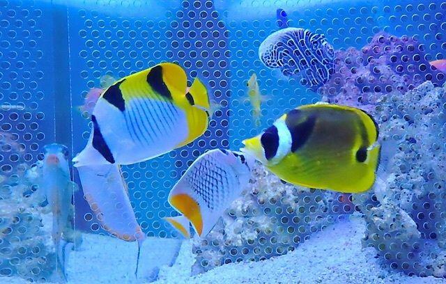 【友情Fish!嬉しい宝物に・・・】