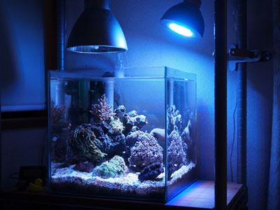 【海水水槽】海水水槽・・・家電への塩害は実際どんなもん??