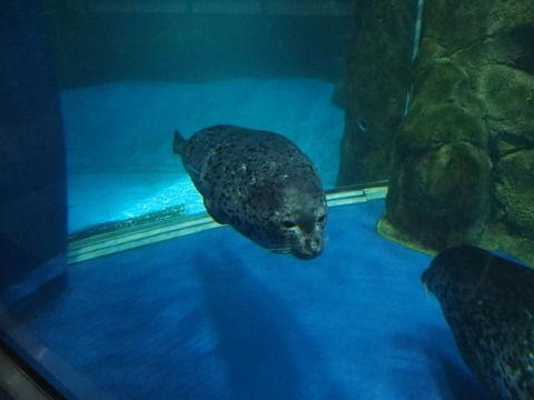 新江の島水族館に行ってきた その4