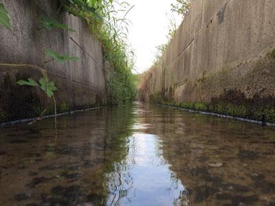 【アクアリウム】近所の用水路ガサってきた!
