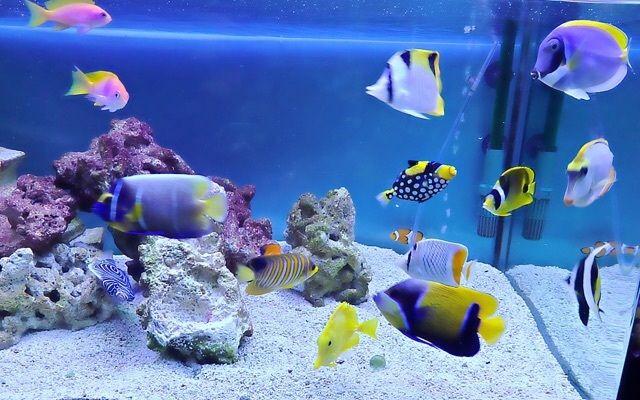 【友情Fish!達は、もう元気で問題ないと・・・】