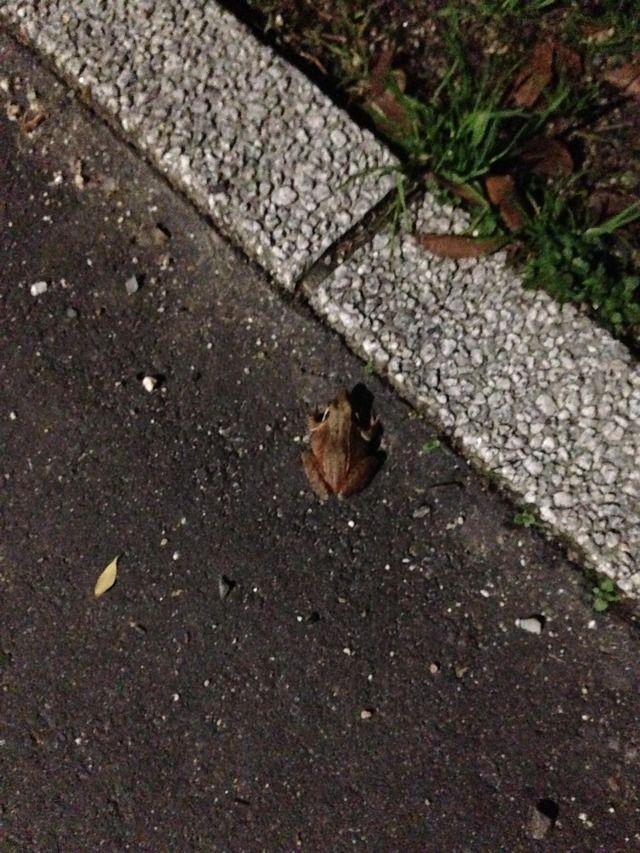 【画像】冬なのにカエル発見した 冬眠しないの?