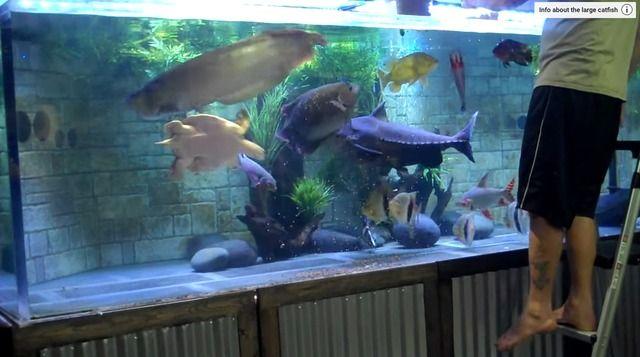 【動画】海外アクアリスト特有のデカ水槽が好きすぎるwwwwwww