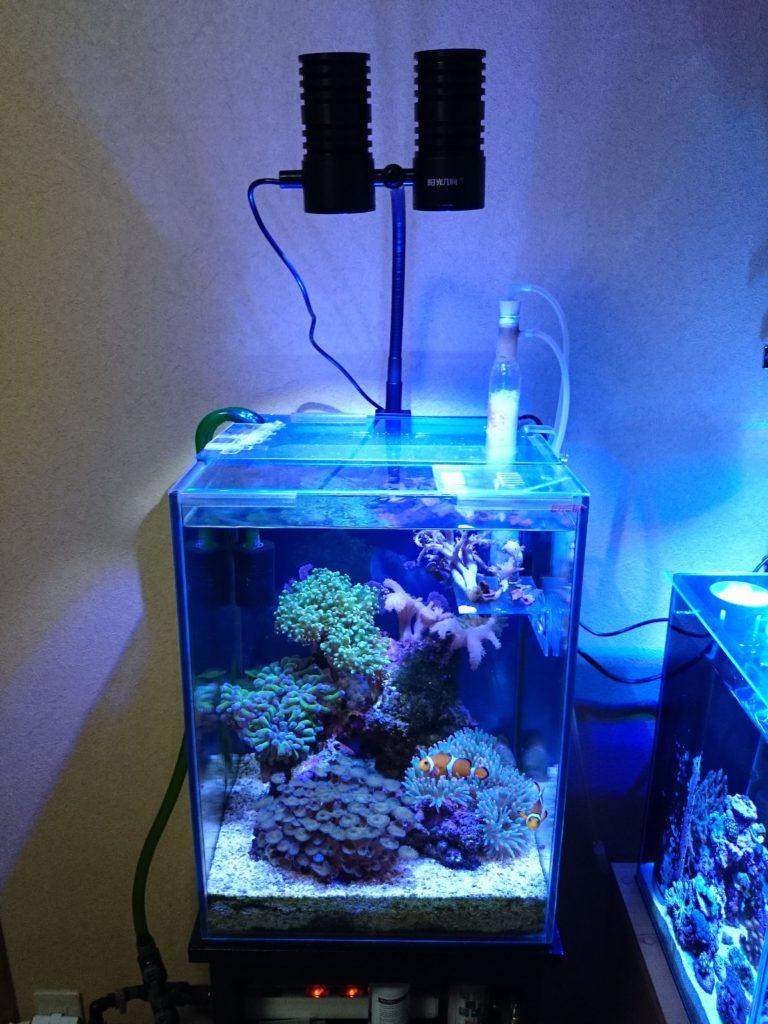 中華製LEDへ変更後のサンゴたちの様子と変化