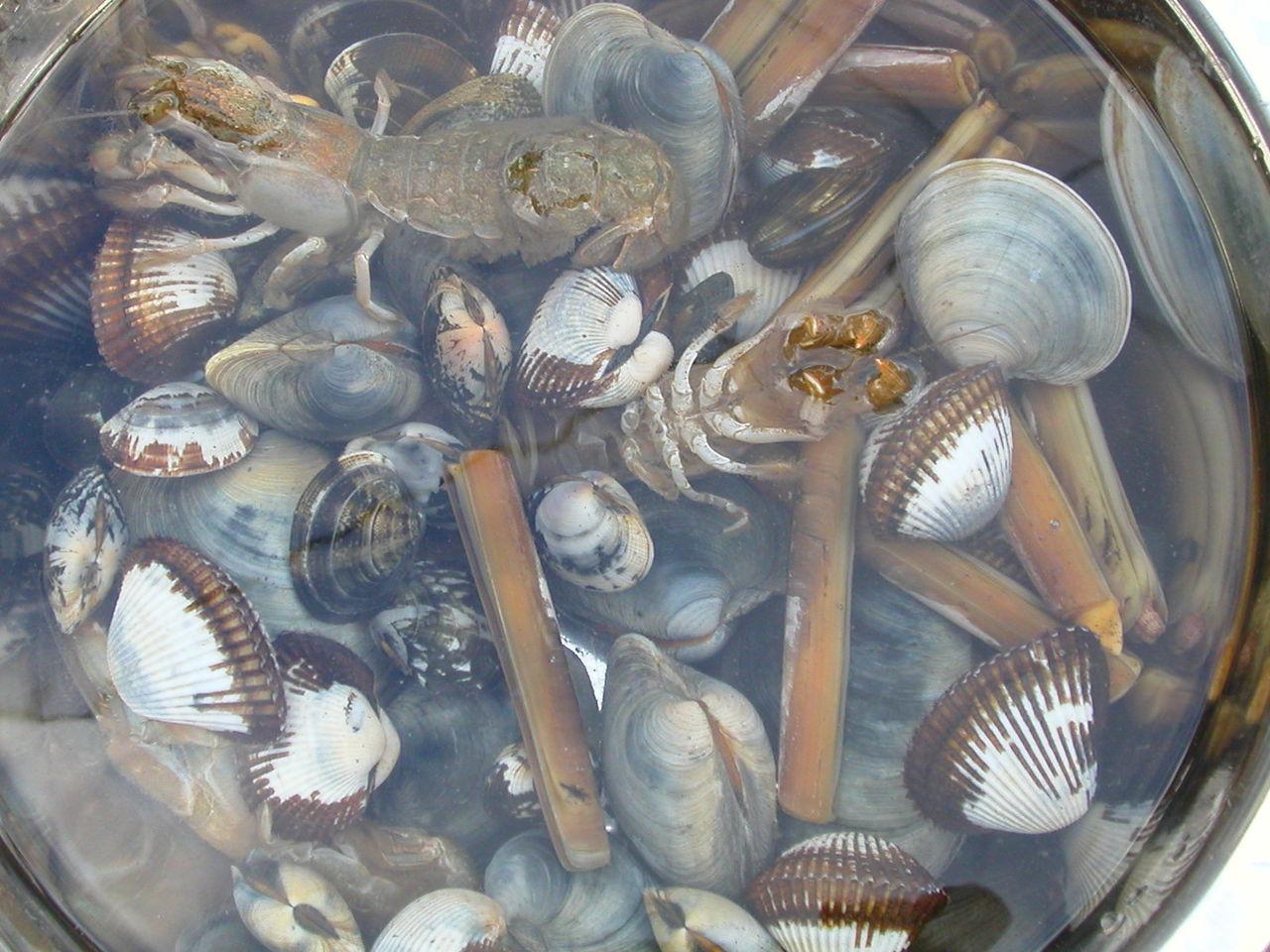 【悲報】浜名湖潮干狩り中止 2年連続、アサリ不漁