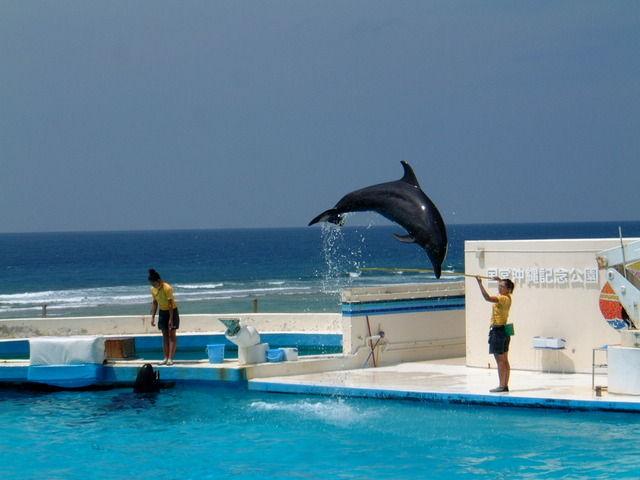 【水族館】イルカ繁殖に本腰 「計画通りには...」施設腐心 静岡県