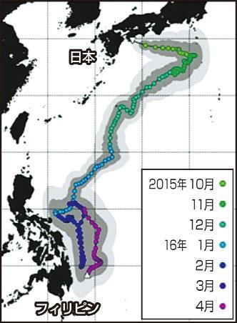 【海洋生物学】高知県土佐清水市で放流したジンベエザメがフィリピンへ回遊 生態解明に向けた第一歩に/海遊館・北海道大