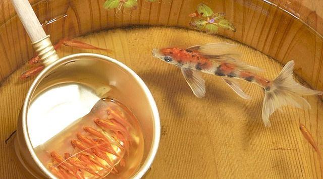 【画像】この金魚。実は、すべて「絵」なんです