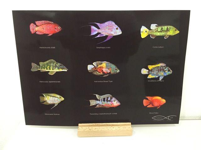 ファロウェラ稚魚、まだ生きてます。